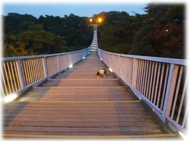 八幡山公園2013-2