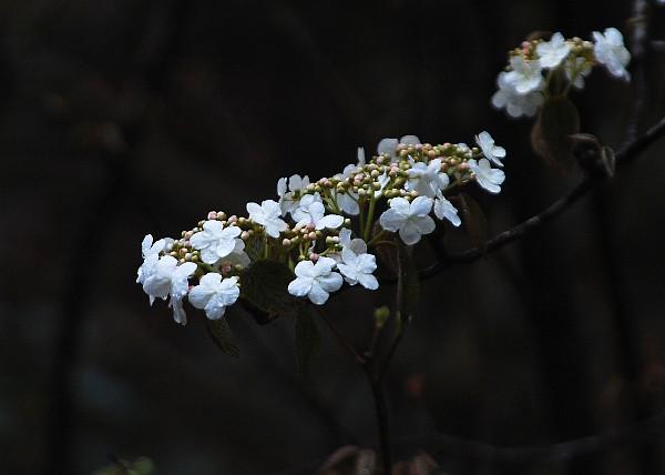 ookamenoki03313.jpg