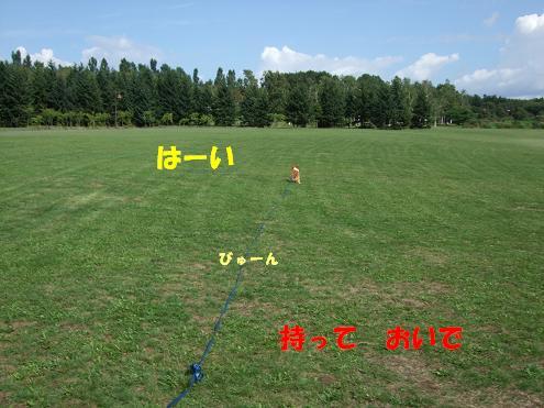 前田森林1
