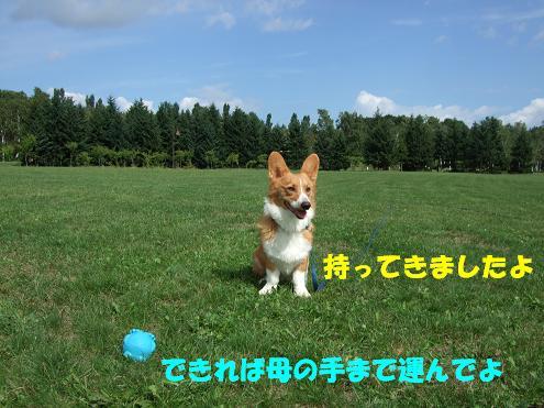前田森林3