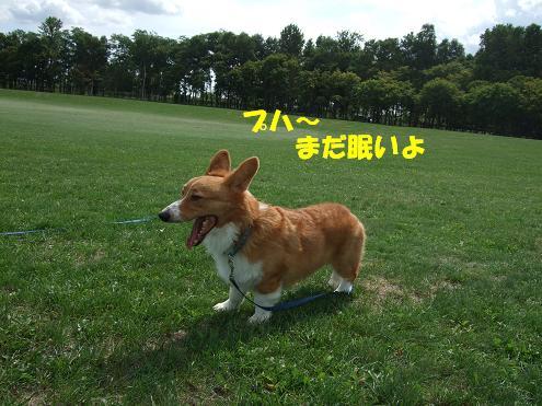 前田森林4