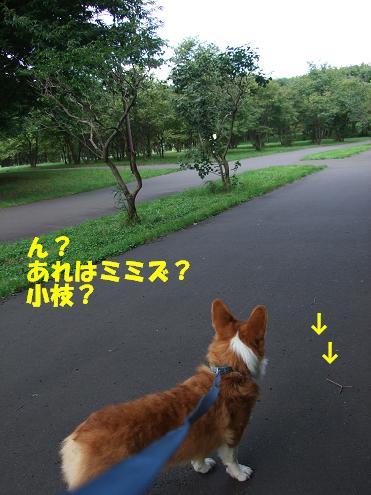 前田森林5