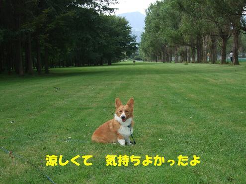 前田森林9