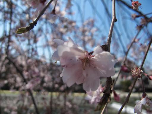 Image-京都4