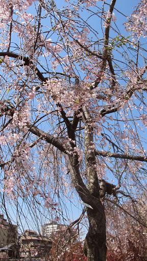 Image-京都0