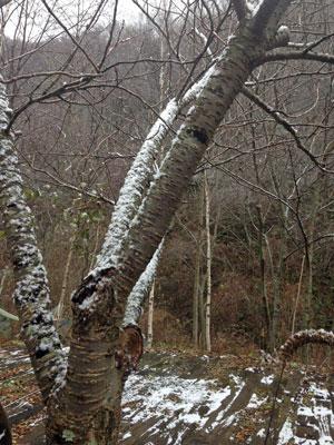 2014,11,15初雪3