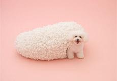 犬のための建築