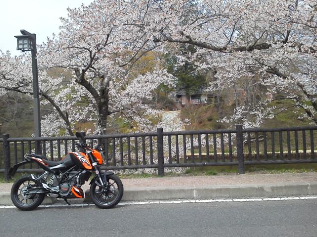 棚倉城跡公園2