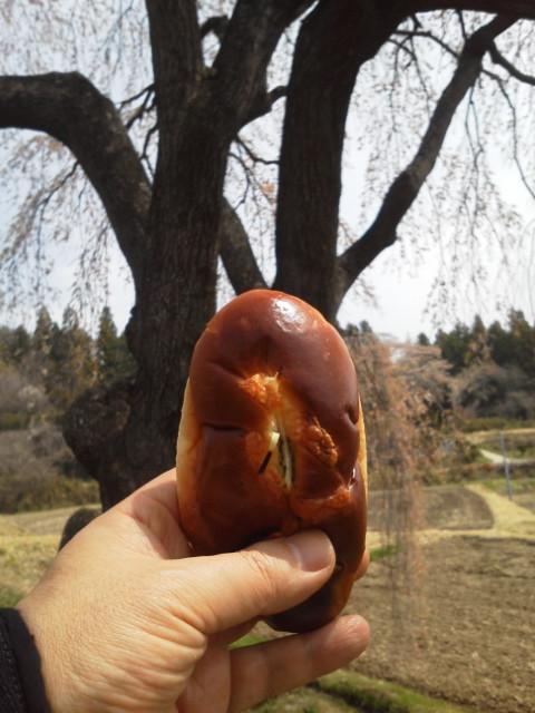 花園の枝垂桜3
