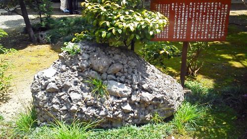 20130503氷川神社さざれ石