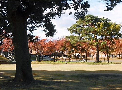 00b 500 20141114 桜並木散歩MsMasumura01