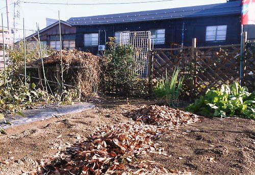 07 500 20141122 落ち葉をLL菜園に