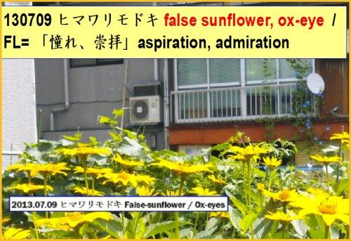 03 500 Flower cards ox-eye