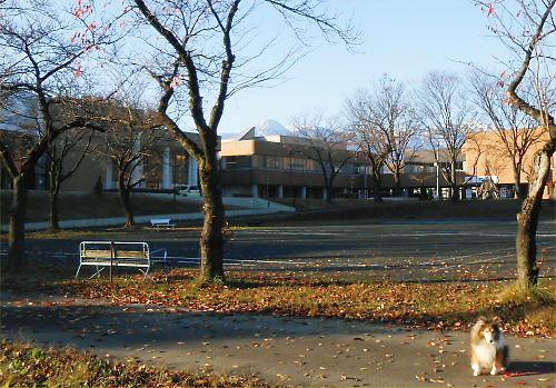 01 500 20141128 桜並木、雪の妙高山 Erie