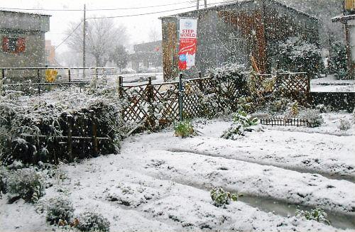 02 500 20141205 初雪2時頃:LLgarden