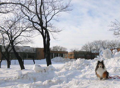 01 500 20141210 桜並木雪 Erie01