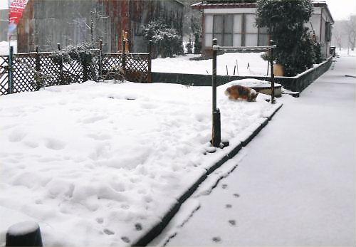 04 500 20141213 1600 pm:降雪中LL菜園Erie