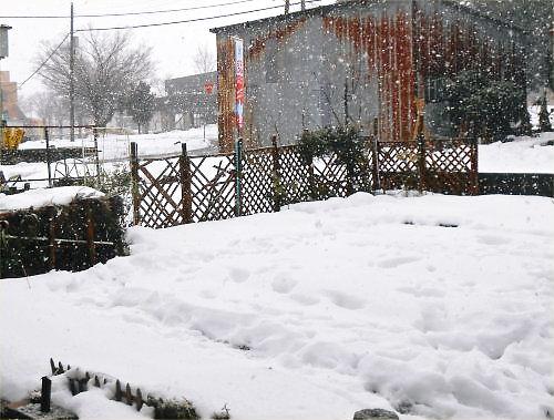 02 500 20141213 1000 am:降雪始めLL菜園