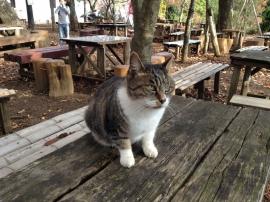 A Cat of Shiro-yama
