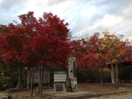 Maple Woods of Takao-san