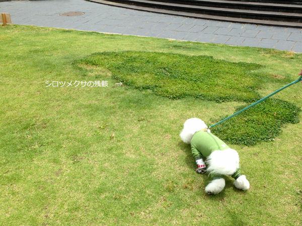 写真 2013-06-01 11 56 48