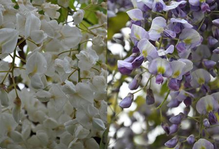 緑水亭 庭園の花