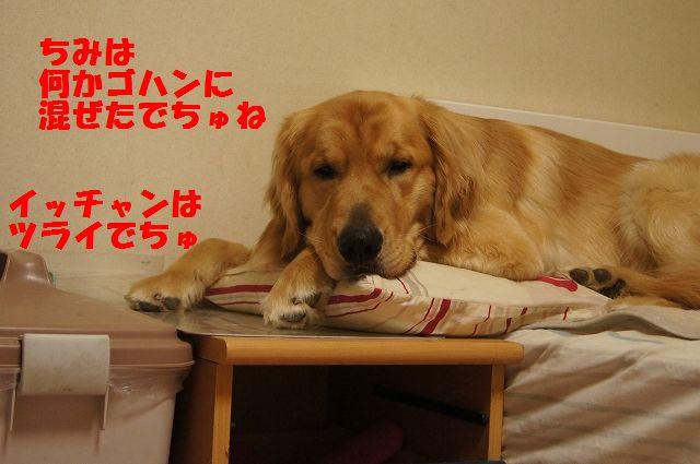 03_20130402222441.jpg