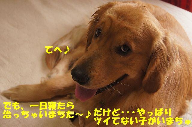 05_20130402222444.jpg