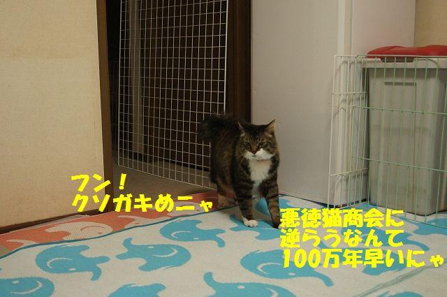10_20130402055658.jpg