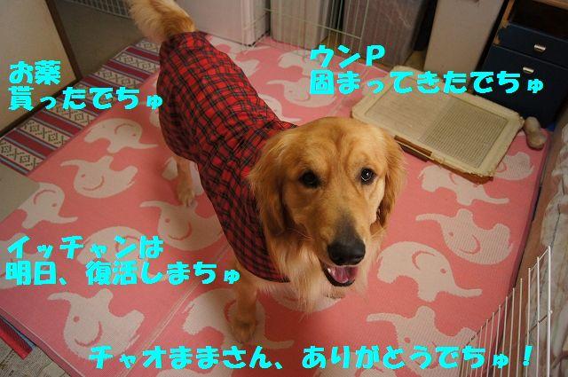 10_20130402222508.jpg