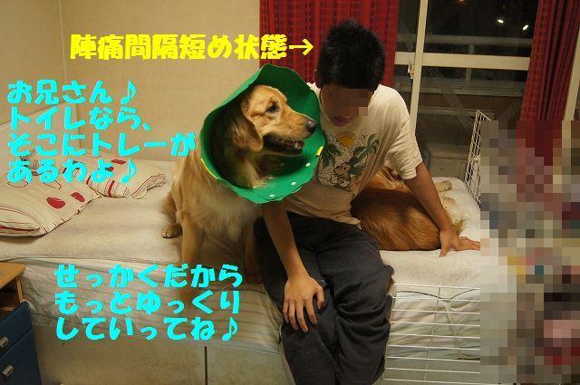 11_20130329125621.jpg
