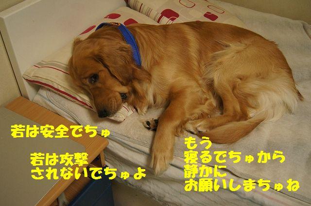 11_20130402055713.jpg
