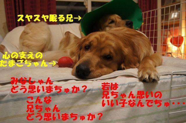 12_20130329055322.jpg