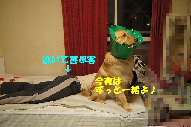 13_20130329125625.jpg