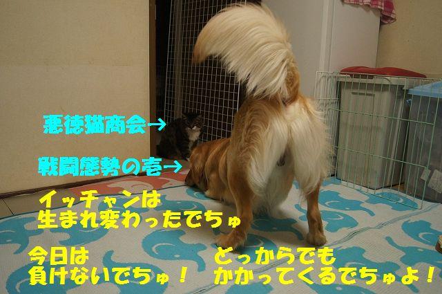 1_20130402055630.jpg