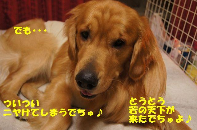 2_20130329055246.jpg