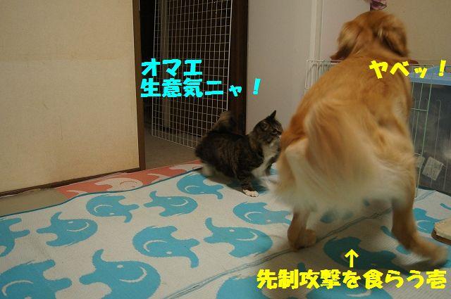 2_20130402055633.jpg