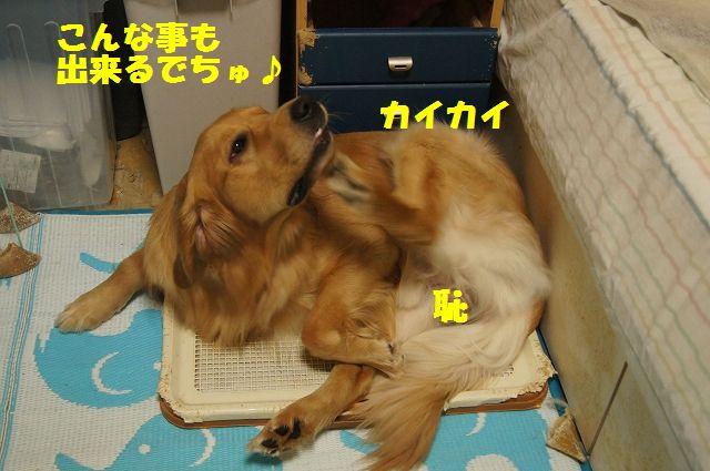 3_20130329075811.jpg