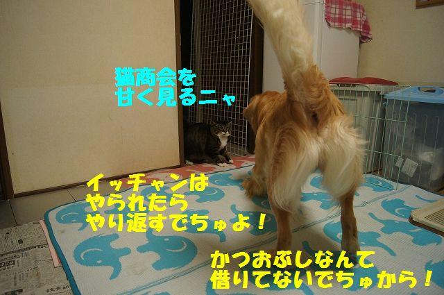 3_20130402055634.jpg