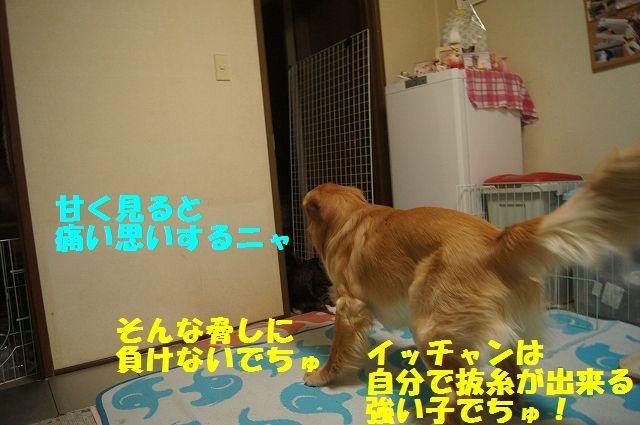 4_20130402055636.jpg