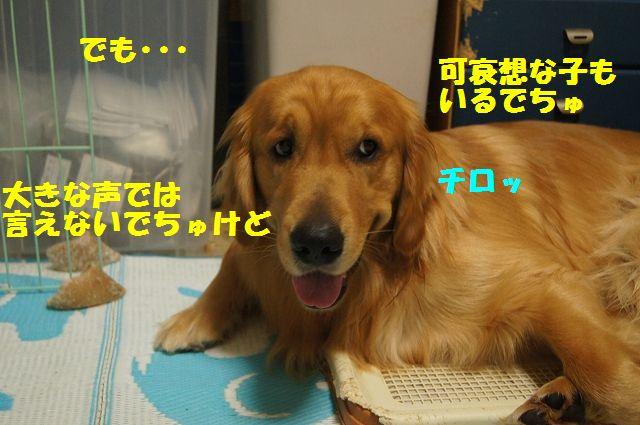 5_20130329075815.jpg