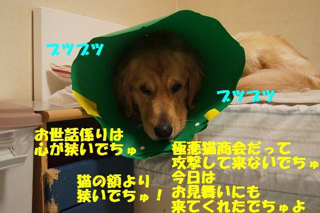 7_20130329055304.jpg