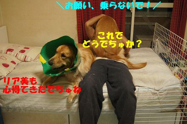 7_20130329125559.jpg