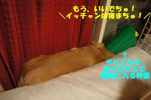 8_20130329075935.jpg