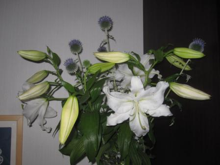 tnH25-07-26カサブランカ切り花 (2)
