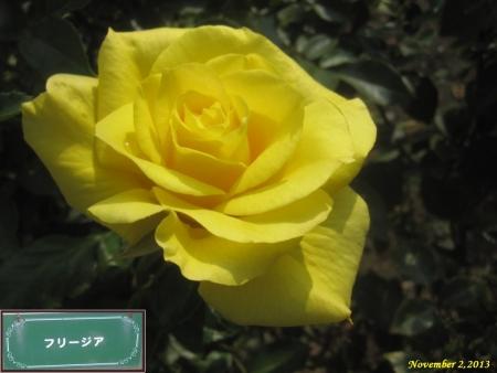 tnH25-11-02フリージア (2)_1