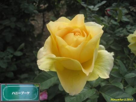 tnH25-11-02ハニーブーケ (3)_1