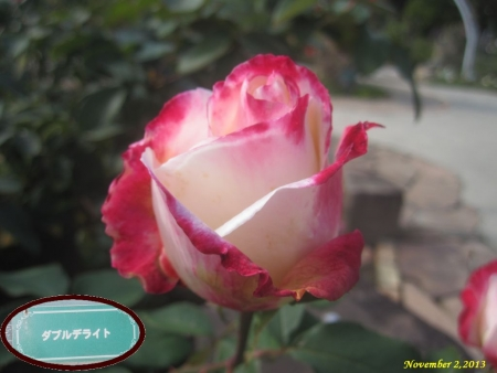 tnH25-11-02ダブルデライト (4)_1