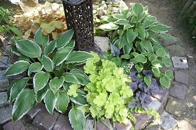 0605-8カラーリーフの花壇