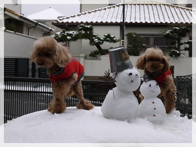雪景色2014-2